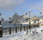 Сезонное жилье в Солнечногорском